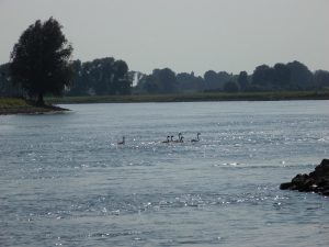 De IJssel bij Welsum