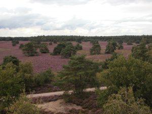 Uitzicht vanaf De Haelberg Epe